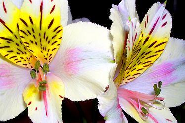 Nacht Orchideen