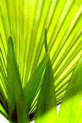 Bild mit Farben,Natur,Grün,Pflanzen,Bäume,Blumen,Palmen