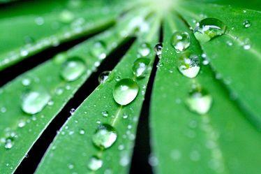 Bild mit Farben,Natur,Elemente,Wasser,Grün,Pflanzen,Gräser,Blumen,Schwarz,Wassertropfen,Regentropfen