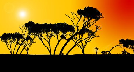 Bild mit Farben,Gelb,Menschen,Natur,Pflanzen,Landschaften,Himmel,Bäume,Horizont,Sonnenuntergang,Ödland