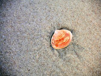 Bild mit Gegenstände,Materialien,Stein,Sand,Muscheln,Sandmuscheln