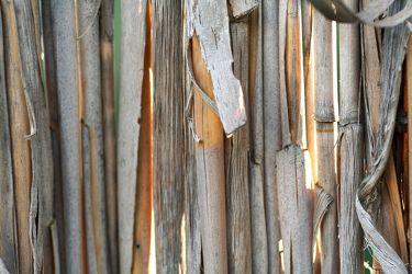 Bild mit Gegenstände, Natur, Pflanzen, Materialien, Holz, Schilf, Struktur, Pflanze, Schilfgras