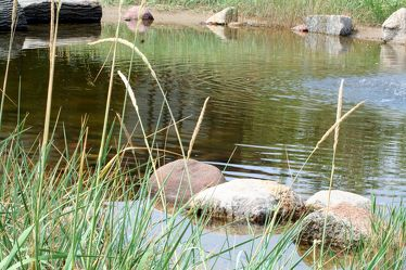 Bild mit Natur, Elemente, Wasser, Pflanzen, Gräser, Landschaften, Gewässer, Küsten und Ufer, Flüsse, Teiche