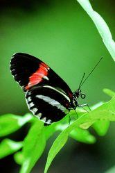 Bild mit Farben,Tiere,Natur,Grün,Pflanzen,Insekten,Schmetterlinge
