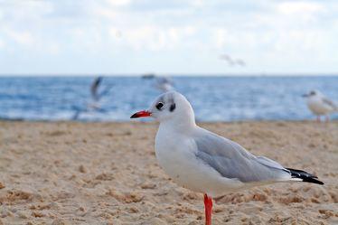 Bild mit Gegenstände, Tiere, Natur, Landschaften, Himmel, Gewässer, Küsten und Ufer, Materialien, Meere, Strände, Stein, Sand, Vögel, Wasservögel, Möwen