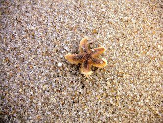 Bild mit Tiere,Materialien,Stein,Sand,Seestern,Sterne