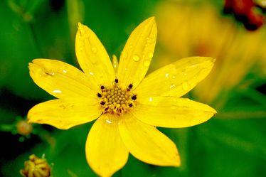 Bild mit Farben,Gelb,Natur,Pflanzen,Blumen
