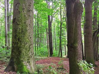 Bild mit Bäume, Wälder, Laubbäume, Wald, Baumkrone, Baum, Baumstamm, Forest, Laubbaum, Nature, Tree, Baumstämme, Laubwald, Laubwälder