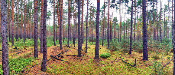Bild mit Natur,Grün,Bäume,Holz,Wald,Lichtung,Baum,Panorama,Waldweg,Nadelbaum,Landschaft,Märchenwald,Märchen Wald,Waldblick,Blick in den Wald,Forstwirtschaft,Nadelwald,Forest,Waldbild,Waldbilder,Wald Bild,Wald Bilder