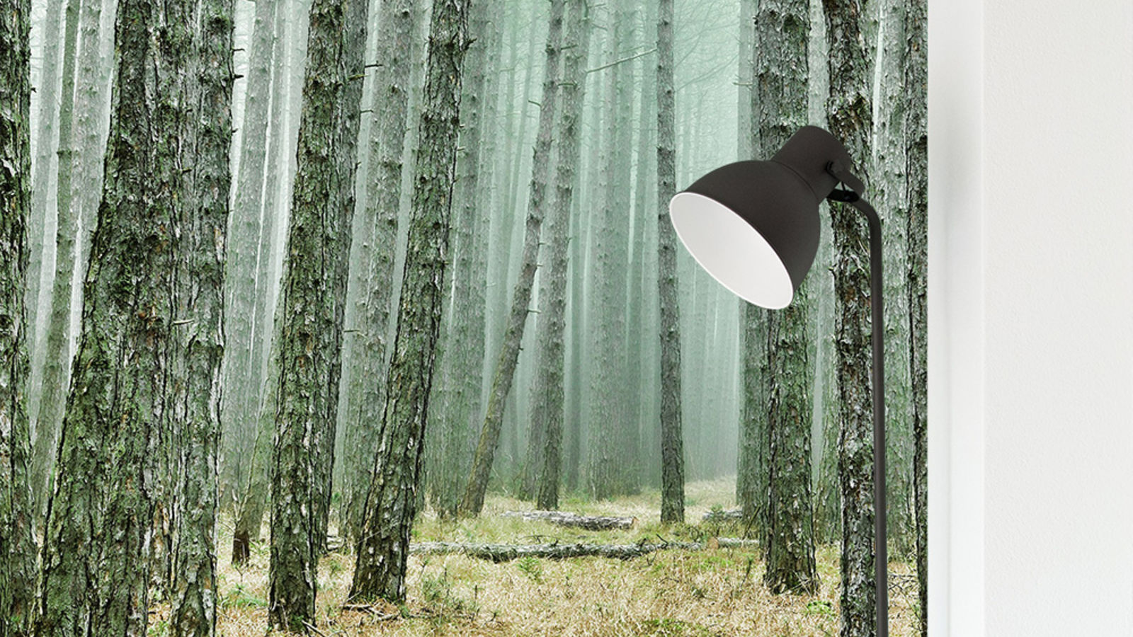 Fototapete Wald im XXL-Format selbst gestalten